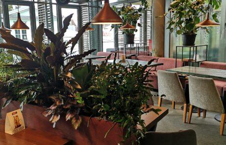 Hubane kohvik Tallinna vanalinnas
